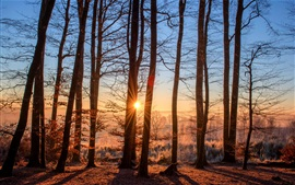 Preview wallpaper Forest, trees, autumn, sun rays, sunrise, morning