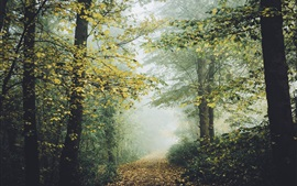 Preview wallpaper Forest, trees, foliage, fog, trail