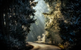 숲, 나무, 도로, 햇빛