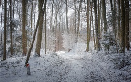 Preview wallpaper Forest, trees, snow, winter, cold