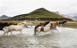 Freedom horses running in water