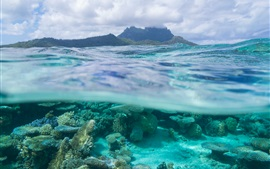 Preview wallpaper French Polynesia, Leeward Islands, Bora Bora, corals, sea, underwater