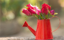 Fresh red roses, water pot