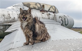 Furry cat, plane wing