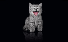 Preview wallpaper Grey striped kitten yawn, black background
