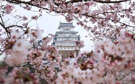 Castillo de Himeji, sakura, Japón