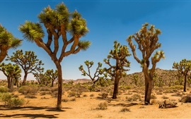 Preview wallpaper Joshua Tree National Park, USA, desert, shrub, trees, grass