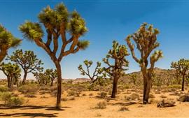 壁紙のプレビュー ジョシュアツリー国立公園、アメリカ、砂漠、潅木、木々、草