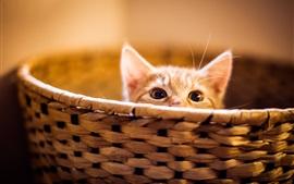 Preview wallpaper Kitten in basket, look up