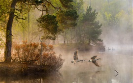 Preview wallpaper Morning, forest, trees, ducks, lake, fog