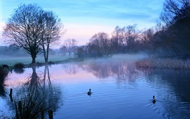 Morning, trees, lake, duck, fog