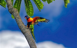 Preview wallpaper Multicolor parrot, tree, blue sky
