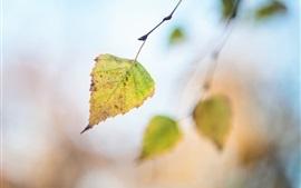 1枚の葉、秋、ボケ