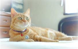 Preview wallpaper Orange cat, rest, bed