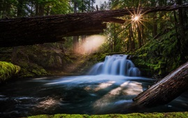 Preview wallpaper Oregon, Whitehorse Falls, waterfall, river, trees, USA