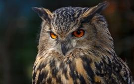 Visão frontal da coruja, olhos, fundo preto