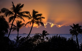 Palm trees, sea, clouds, sunset