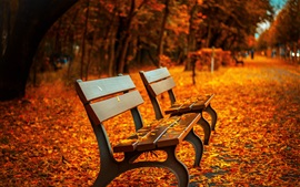Park, bench, red leaves on ground, path, autumn