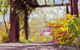 Parque, caminho, flores rosa