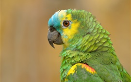 Preview wallpaper Parrot portrait, green feathers