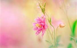 Preview wallpaper Pink petals flower, stem, blurry background