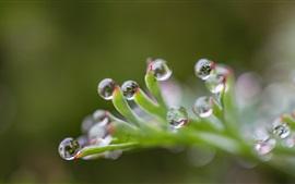 Растения, капли воды