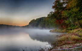 Estanque, niebla, árboles, por la mañana