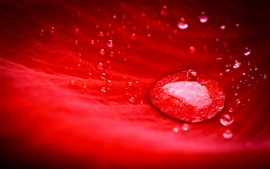 Preview wallpaper Red flower petal macro photography, water drops