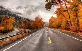 Camino, árboles, otoño