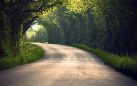 Road, trees, grass, nature
