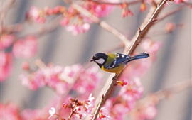 Preview wallpaper Sakura, bird, spring