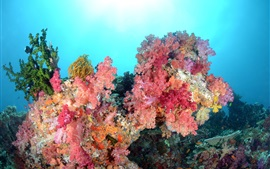 Preview wallpaper Sea, underwater world, beautiful corals