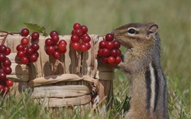 Preview wallpaper Squirrel and red berries