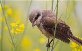Preview wallpaper Summer bird, sparrow