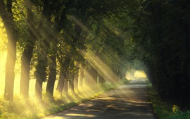 Summer, trees, road, sun rays