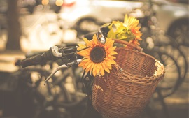Preview wallpaper Sunflowers, bike