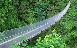 Подвесной мост, металлическая сетка, зеленые джунгли