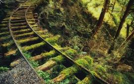 Epinettes, rails, mousse, forêt