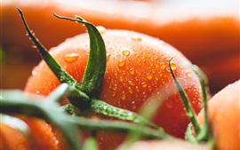 Aperçu fond d'écran Tomates, légumes, gouttes d'eau