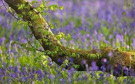 Árvore, folhas verdes, flores azuis
