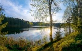 미리보기 배경 화면 나무들, 잔디, 호수, 햇빛, 봄