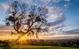 Деревья, трава, солнечные лучи, утро