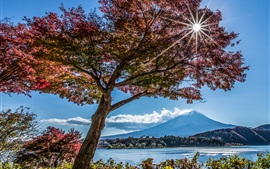Trees, lake, Fuji mountain, sun rays, Japan