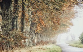Preview wallpaper Trees, road, fog, autumn, morning