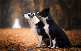 Preview wallpaper Two dogs, sit down, foliage, autumn
