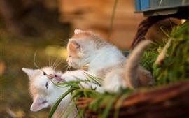 Preview wallpaper Two kittens playful, bokeh