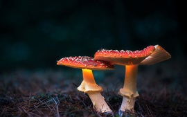 Preview wallpaper Two red mushrooms