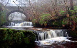 Cascada, río, puente, árboles