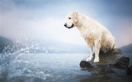 Preview wallpaper Wet dog, lake