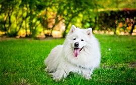 Descanso de cachorro branco na grama verde